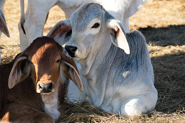 <p>The importance of supplementation for your livestock</p>